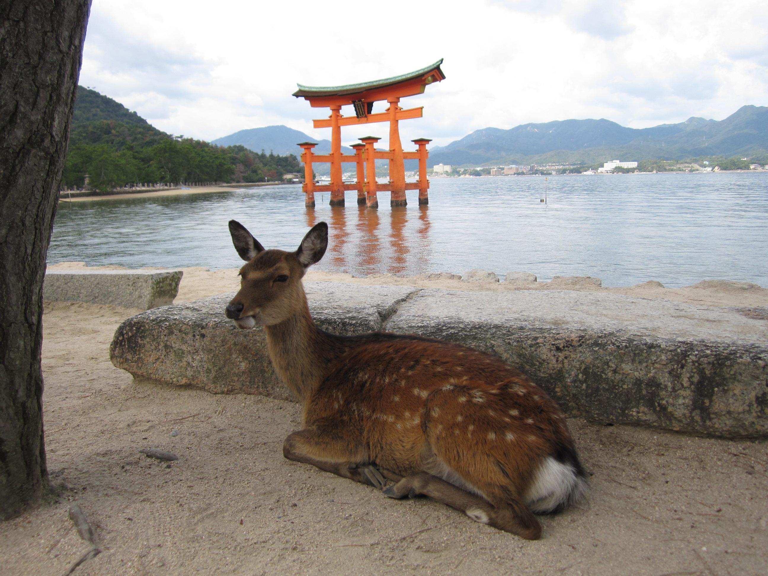 広島でお待ちしております